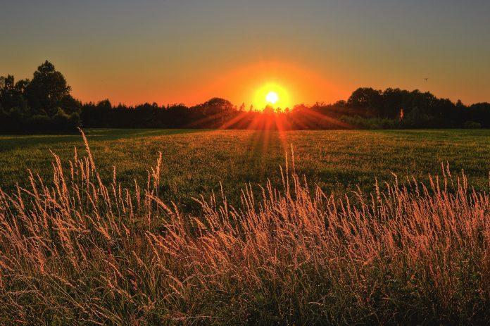 Planowanie prac rolniczych – z jakich narzędzi warto korzystać?